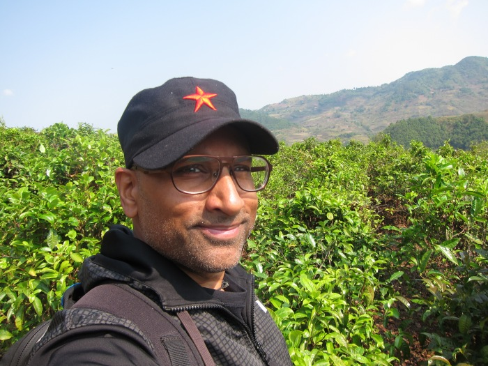 In a patch of cultivated tea bushes, Xishuangbanna.