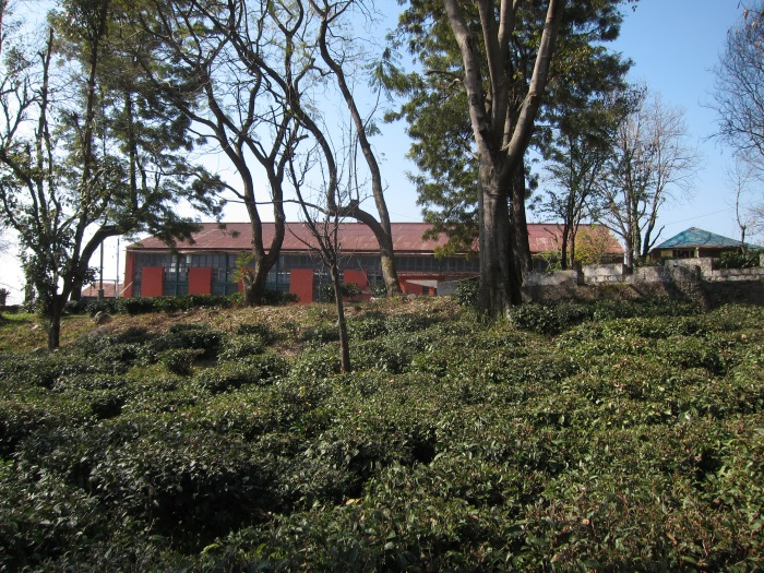 Bir Cooperative Tea Factory.