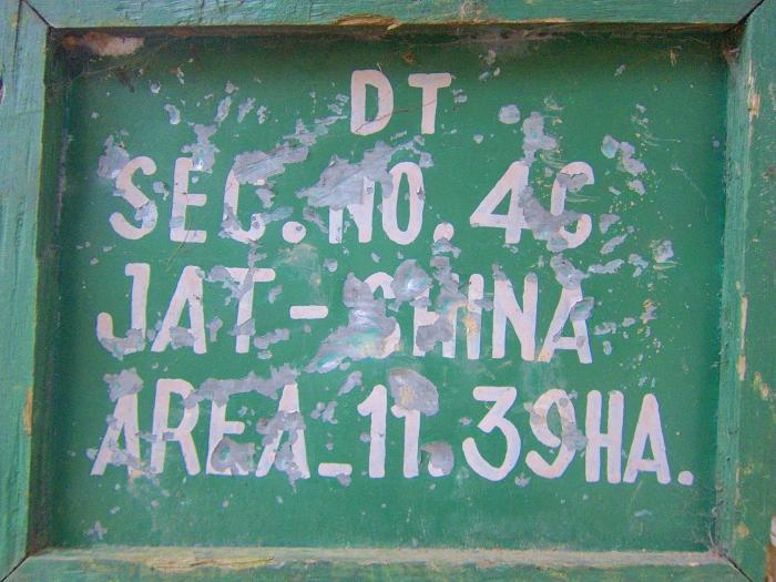 "Darjeeling tea gardens grow the China ""jat"" or variety of tea, Camellia sinensis var. sinensis."