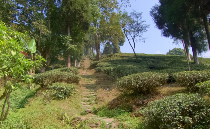 Dooteriah Tea Estate