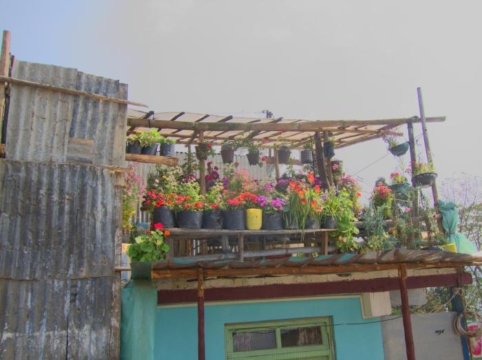Darjeeling Tea GardenCommunities