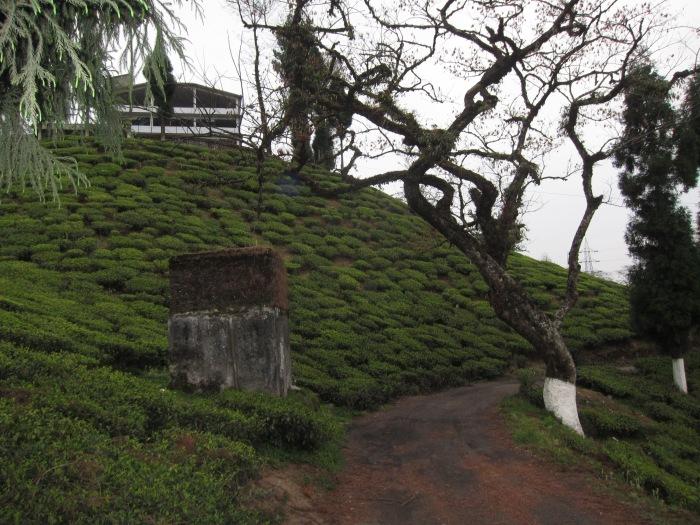 Thurbo Tea Factory.
